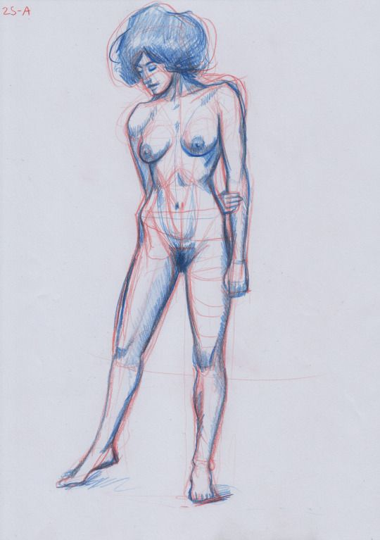 Anatomic study in red and blue colored pencils #anatomy #drawing #colored #pencils #nude