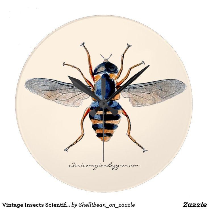 Vintage Insects Scientific Entomology Fly Large Clock Large - wanduhren für küche