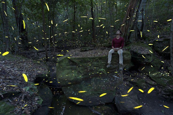 Fireflies River Rock