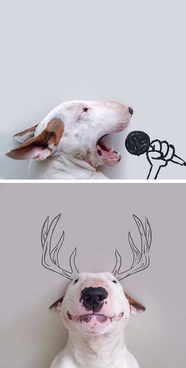 After Rafael Mantesso's wife left him with nothing but the dog, he was inspired to create this fun series.