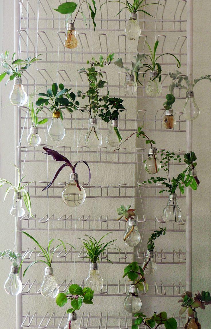 fotos de muchsas bombillas colgando con plantas dentro en un expositor de hierro
