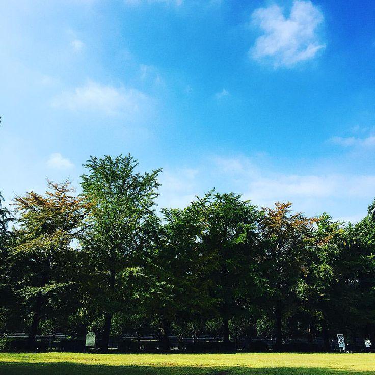 おはようございます。夏日を思い返すような日差しですが葉の色付きと銀杏の匂いが秋薫東京、いかがお過ごしでしょうか?本日も12時〜20時営業にて皆様のご来店お待ちしております。 ■AudienceShop http://www.aud-inc.com/phone/   #audience #オーディエンス #japan #tokyo #東京 #kouenji #高円寺 #新高円寺 #shop #webshop #善福寺川緑地 #杉並 #銀杏 #秋薫 #空 #樹 #雲 #芝生 #公園 #広場