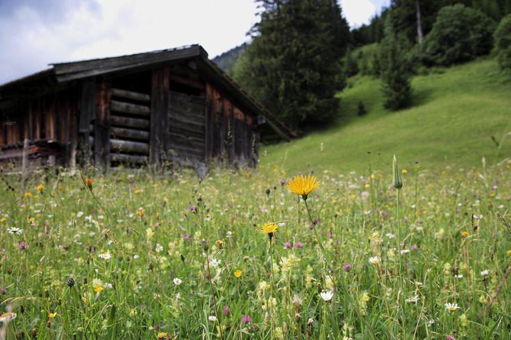 Bergwiese - Foto by E. Reiter