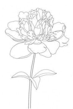 Pfingstrose zeichnen - Blumen Zeichnung-dekoking-com-4