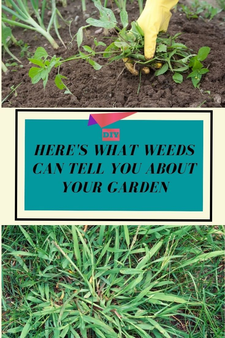 If You Have Weeds In Your Garden Don T Panic Here S What They Can Tell You About Your Garden Diy Life Hacks Garden Solutions Gardening Tips