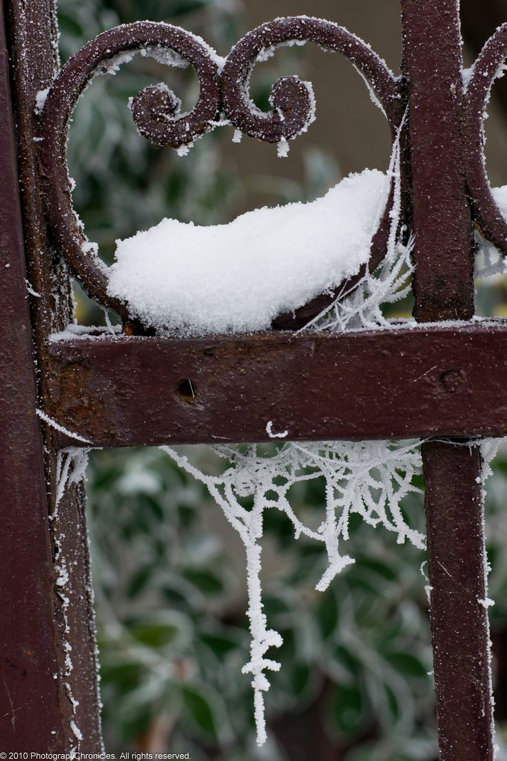 Bucarest: Garden Gates, Snow, Winter Wonderland, Iron Fence