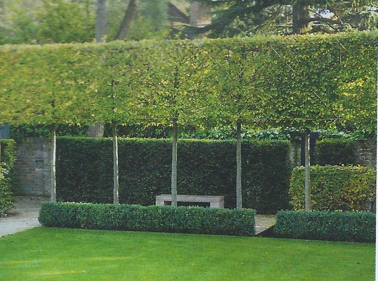 Pleached Hornbeam hedge; garden by Charlotte Rowe; part of a photo by Margaret Majerus.