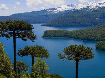 Chile-Lago Conguillio, IX Región