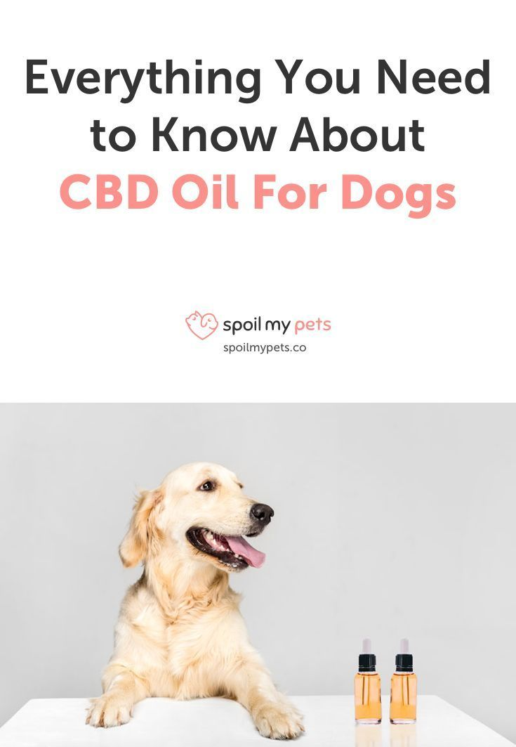 An In Depth Guide To Cbd Oil For Dogs Everything You Need To Know
