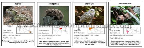 Animal Information Cards by Montessori Print Shop