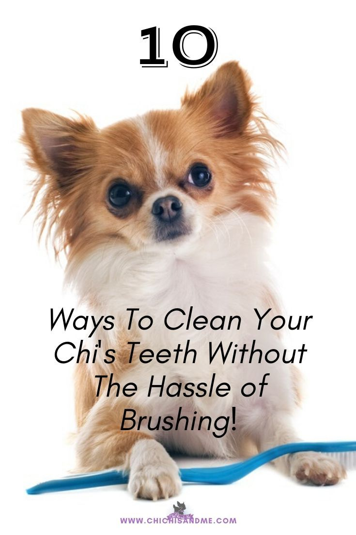 how to clean your dog's teeth without a toothbrush