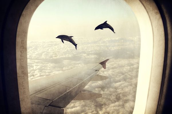 Monday Dream - Flying with My Dolphin Friends Art Print