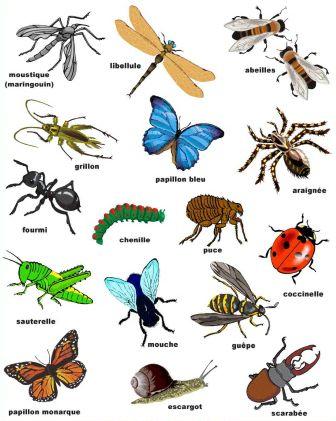 Quelques noms d'insectes