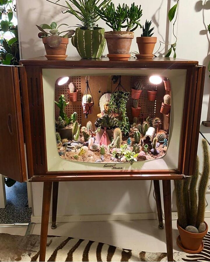 Awesome Cactus Collection Planted Inside An Old Tv Decor Home Decor Rental Decorating