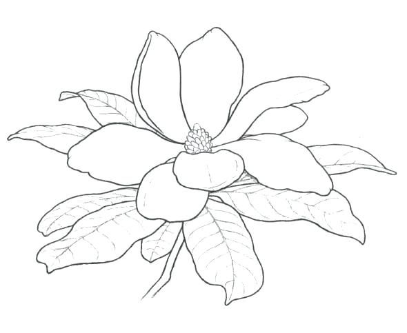 Magnolia tree blossom from coloring page. | Flower drawing ...