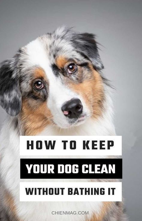 Best Dog Training Techniques Dogtrainingmilton Dogtraininghacks