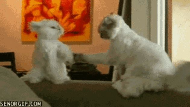 Cat Health Care Funny Giff #68910 - Funny Cat Giffs|Funny Giffs|Cat Giffs