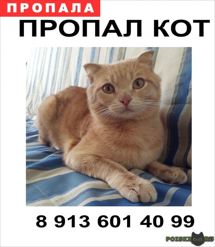 Пропал кот любимец семьи г.Омск http://poiskzoo.ru/board/read31507.html  POISKZOO.RU/31507 Пропал кот в микрорайоне Кристалл Окрас светло рыжий (персиковый), хвост подстрижен как у льва Если его кто видел, знает, где он прячется, пожалуйста, сообщите по телефону ... Очень переживает ребенок, кота очень любят и ждут дома Ценна любая информация Вознаграждение гарантируем  РЕПОСТ! @POISKZOO2 #POISKZOO.RU #Пропала #кошка #Пропала_кошка #ПропалаКошка #Омск