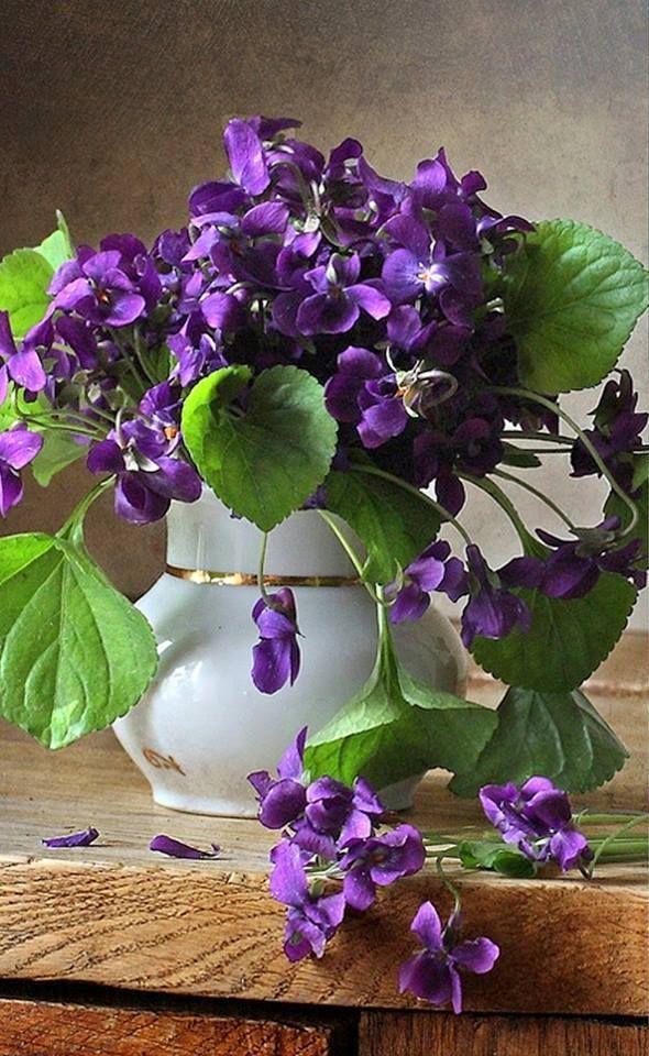 violet 346 best Flowers images on Pinterest