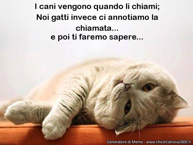 Il meme di Il micione: http://www.chicercatrova2000.it/cards_generator/show_meme.phtml?id=14