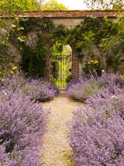 Lavender garden [location and photographer unknown]