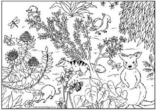Australian animals colouring page, kangaroo, koala, kookaburra, cockatoo, tasmanian devil - and many more colouring pages and activities