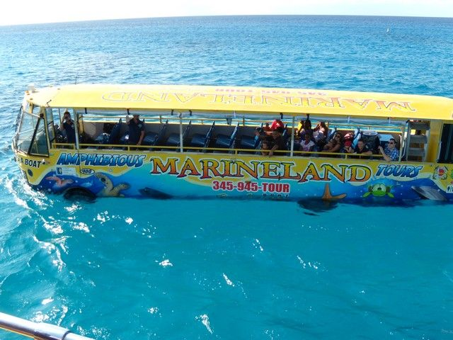 Best Of Cayman By Amphibious Bus & Snorkeling in Grand Cayman, Cayman Islands = Carnival Excursion Information