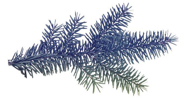 Jmelí ,šišky,větvičky a jiné | vánoční blog