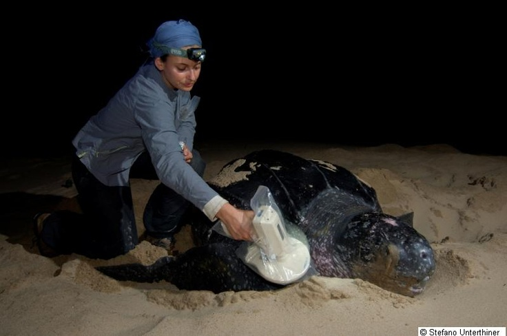 Dr Sabrina Fossette, a marine bioscientist who works with sea turtles, humpback whales and jellyfish (Swansea University)