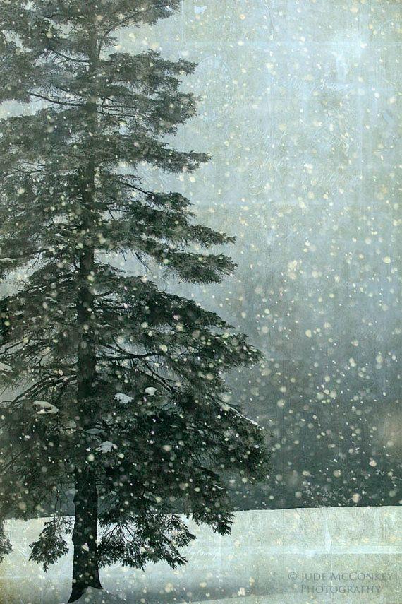 winter snow fir pine tree l