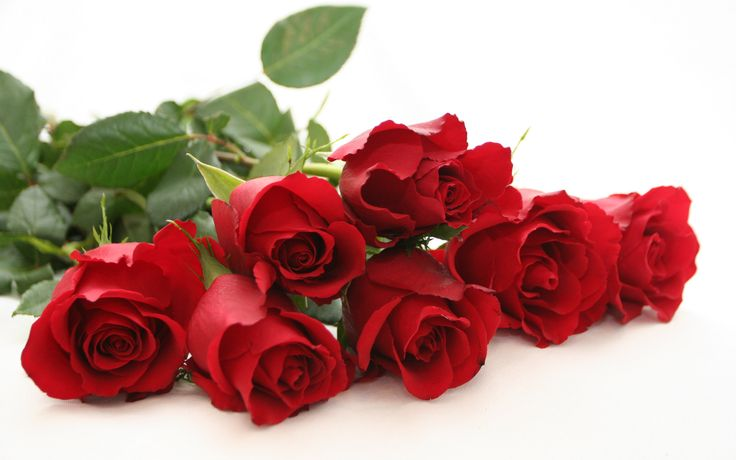 Seven Roses ...  The Legend of the Rose    from Troop 893, Richmond, VA    This is a nice touch. It can be read by another Eagle's mother and then the Eagle recipient presents his mother with 7 red roses.Symbols, Red Flower, The Eagles, Beautiful Flowers, Red Roses, Home Fragrance, Rose Wallpapers, Mothers Day Gift, Desktop Wallpapers