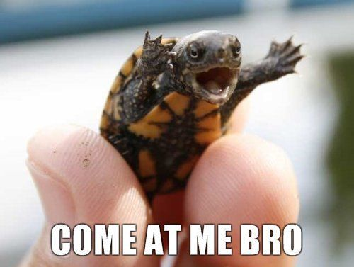 cute puppies with captions | Cats, Dogs and other Turtles – Cute or Funny? » Insomniac Ramblings