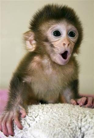 Heee heeee - love me some baby monkeys!