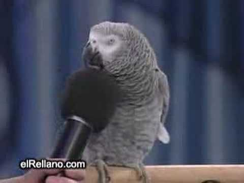 Talking Parrot. saw this parrot on the tv show. very beautiful and lovley.