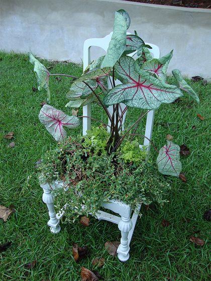 Deze zomer spotte Tuinieren- blogger Kristel de trend al: groen op gekke plekken.