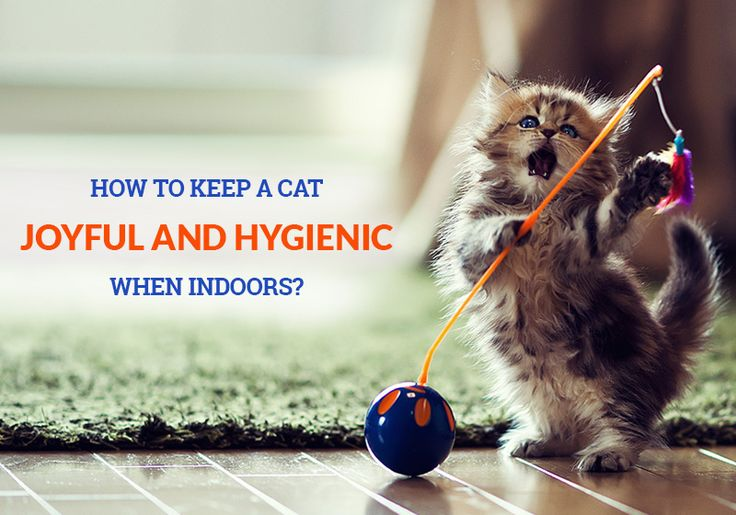 Indoor Cat Care #Tips - How To Keep A #Cat Joyful And #Hygienic When #Indoors? -