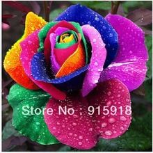 RAINBOW ROSE SEEDS http://chinasalessite.com