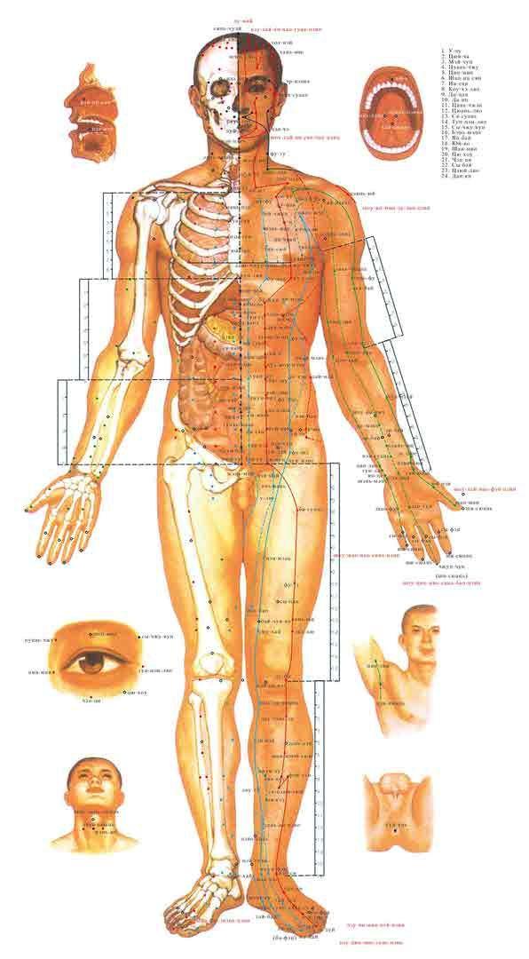 """""""Кандадзя"""" -Применение при заболеваниях  Применение при заболеваниях: лишний вес, ДЦП, псориаз, параличи и парезы конечностей, остеохондроз, остеопороз, варикоз, шпора пяточная, диабет, гастрит, бронхиальная астма, ишемическая болезнь сердца, подагра, снижение половых функций, коксартроз, гонартроз, артрит, артроз, мастопатия, гипертериоз, дряблость кожи, ожирение печени, близорукость, хронический насморк, простатит, спазм лицевого нерва, целлюлит, стресс, переутомление, болезнь Паркинсона…"""