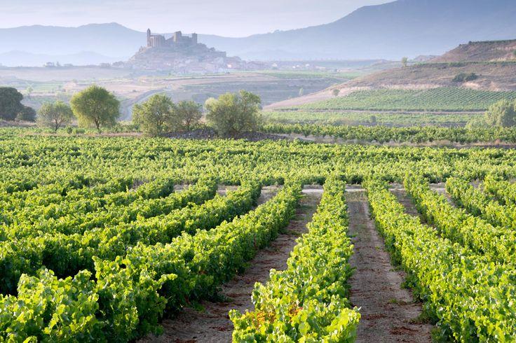 Vineyards in La Rioja, Spain