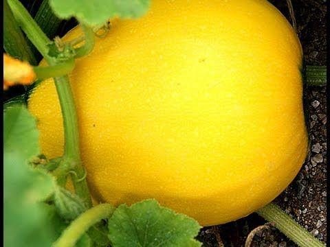 Hobi Bahçesi - Küçük Çapta Meyve Sebze yetiştirme 2. Bölüm - YouTube