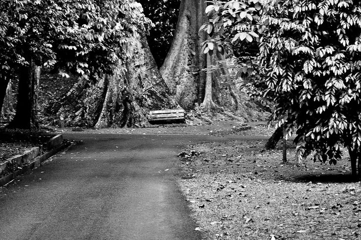 empty forest by fikha astrida - beneath the shady trees without noise feels very comfortable and peaceful. close your eyes and feel your dreams will come true