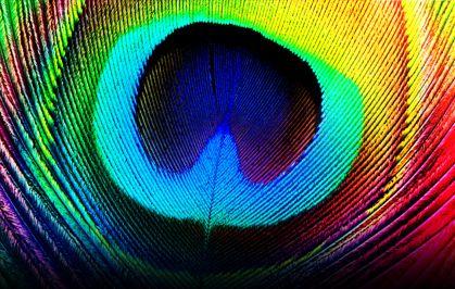 Wallpaper Desktop Background Bird (30)