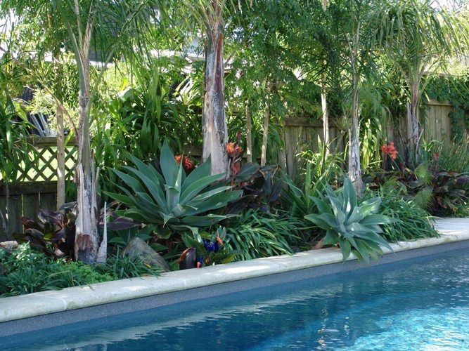 Florida Landscaping Ideas For Backyard small gardens landscaping ideas floridathe garden inspirations Subtropical Pool Landscaping