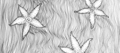 Little starfish on the bottom of the ocean.I'm still inspired by marinistic atmosphere and silence of the deep. Today I tried stippling to define the shapes and shadows without sacrificing the op art effect of lines. I'm really content with the results. I'll definitely do use this technique more often.Black ink, pen, mix media paper.