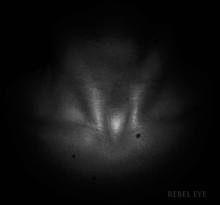 The Body. Part 1. Collarbone collaboration. bw black and white photography digital collarbones light