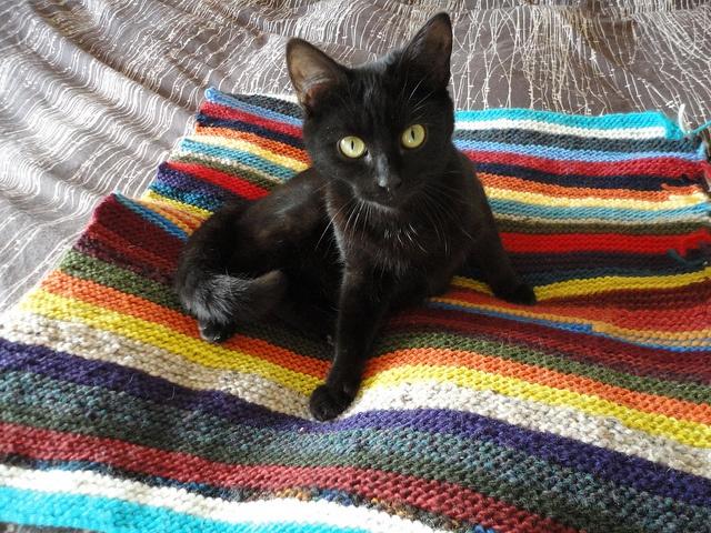 Crochet Cat Bed For Animal Shelter