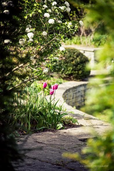 Tulips at the Lutyens Garden in Ballintubbert at Easter. Ballintubbert Gardens and House is a beautiful wedding venue in the Irish Midlands and the Lutyens Garden is an ideal location for a humanist ceremony.