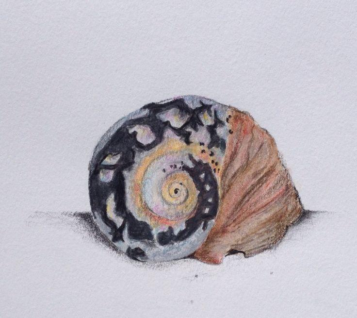 "Turbo sarmaticus - Lisa McGregor 2.5""x3"" Faber-Castell polychromos & Lyra Rembrandt Aquellas colored pencils"