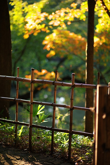 Shin Edogawa Park, Tokyo, Japan. Bamboo Fence. Would Be Perfect To Keep
