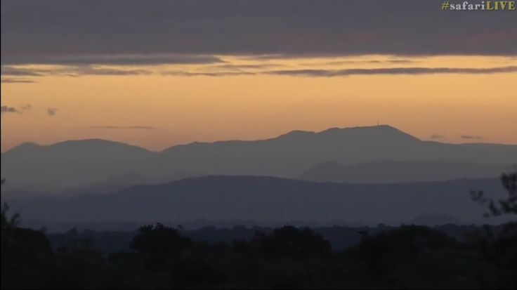 safariLIVE Blue Mountains  3/20/17